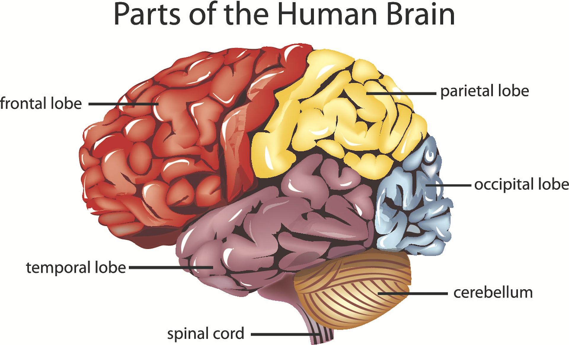Basic Diagram Brain - Block And Schematic Diagrams •