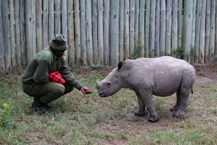 #WorldRhinoDay rhino poaching Africa