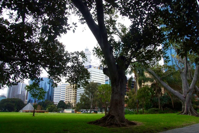 Perth has long had many fine parks but is losing vegetation cover in a band of increasingly dense development across the city. Ruben Schade/flickr, CC BY-NC