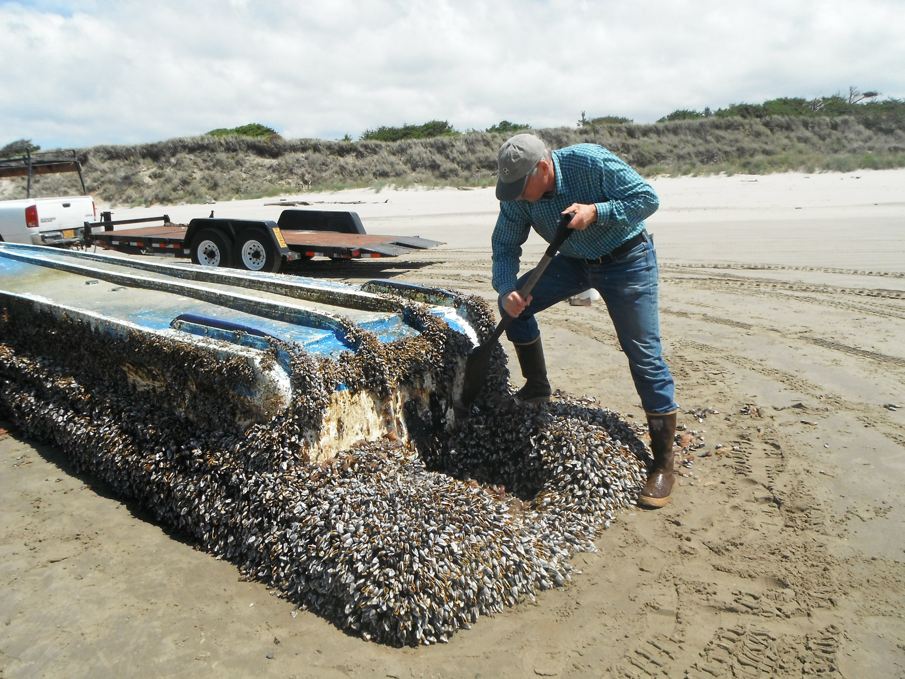Debris from the 2011 tsunami carried hundreds of species across the Pacific Ocean
