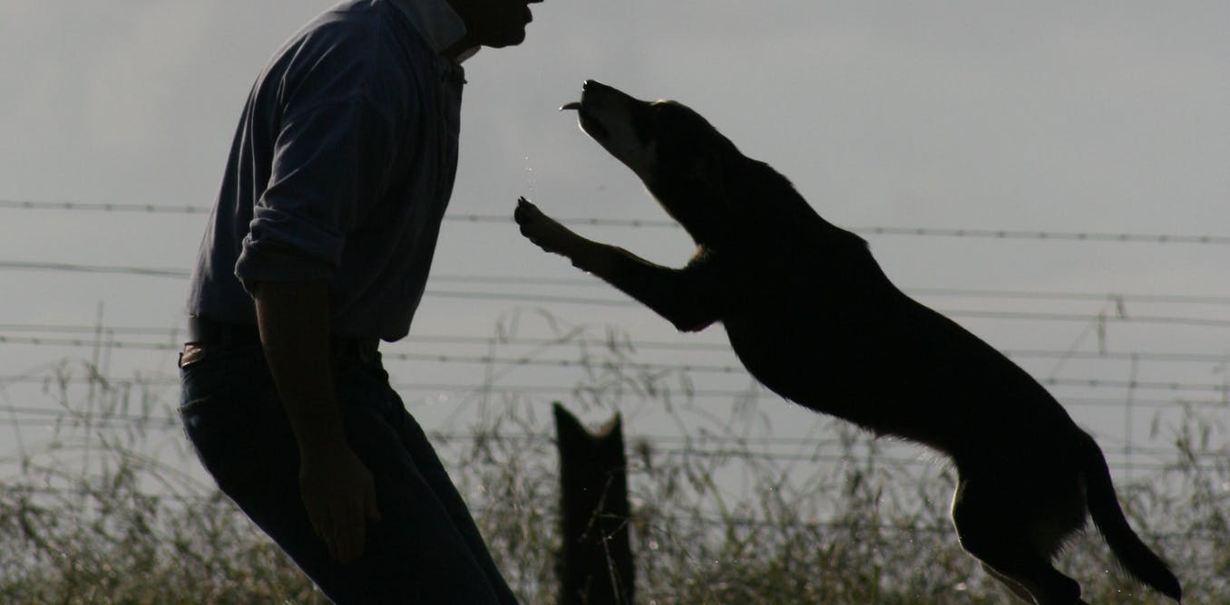 Whose best friend? How gender and stereotypes can shape our relationship with dogs
