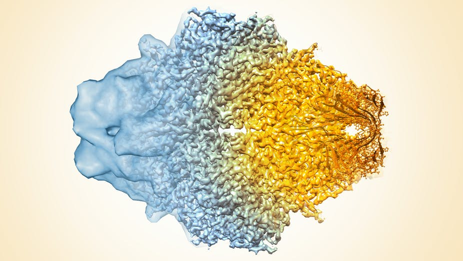 Chilled proteins and 3-D images: The cryo-electron microscopy