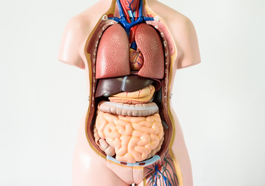 Seven body organs you can live without ccuart Image collections