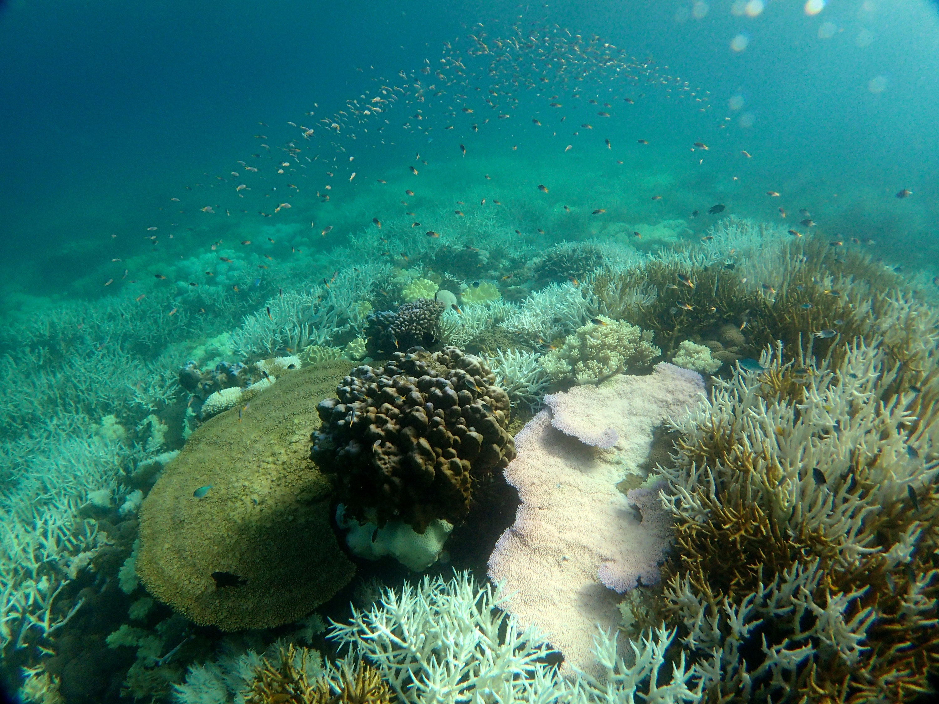 Picture of coral bleaching