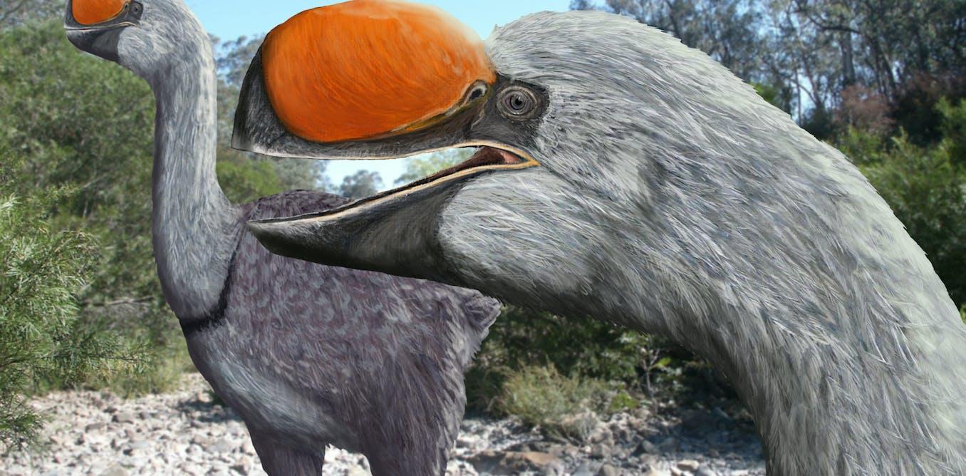 New research reveals the origin of Australia's extinct flightless giants, the mihirungbirds