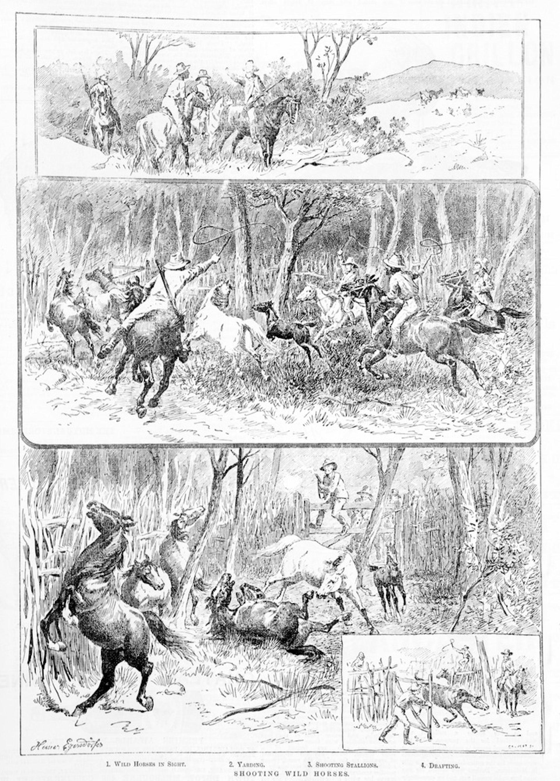 Picture of Shooting wild horses, Samuel Calver
