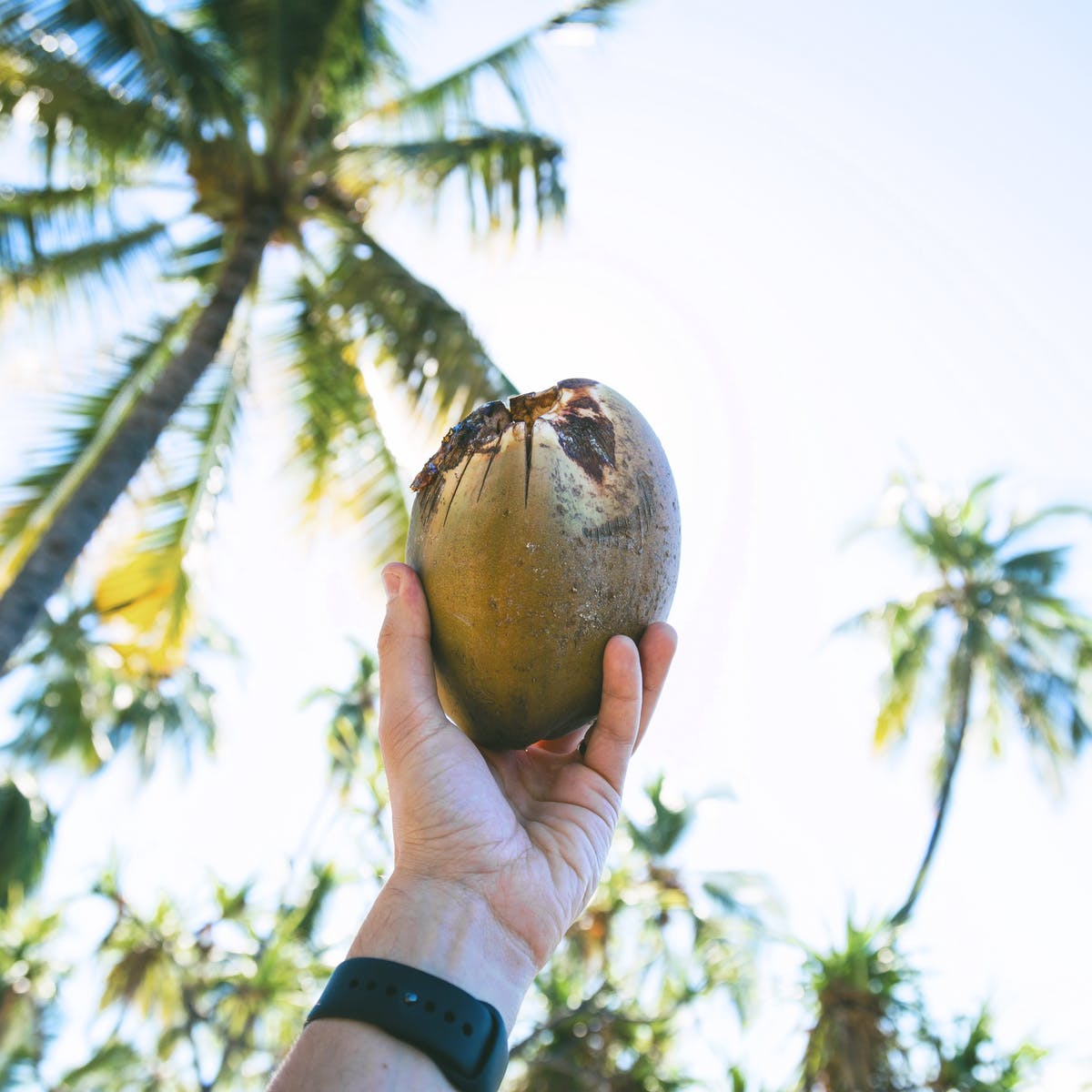 Five claims about coconut oil debunked