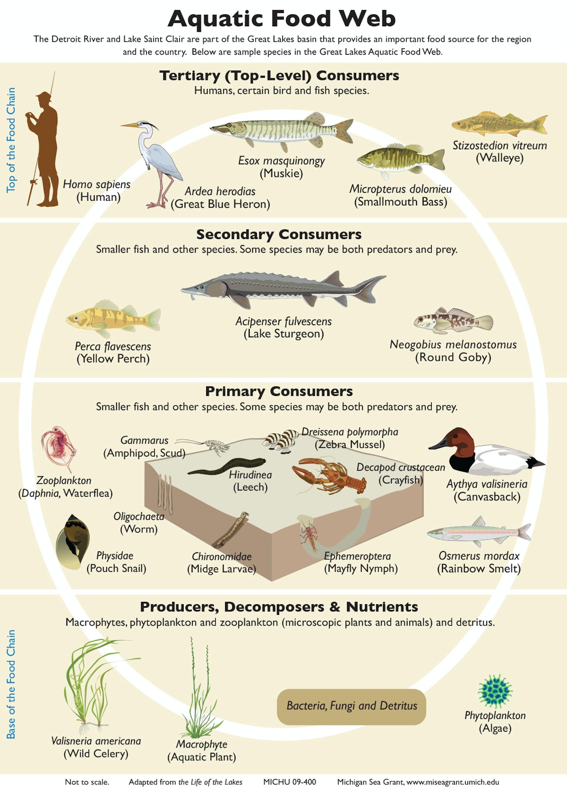 Auto definition biology 15
