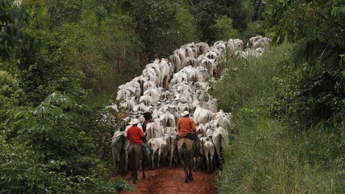 For Cattle Farmers In The Brazilian Amazon Money Cant Buy Happiness