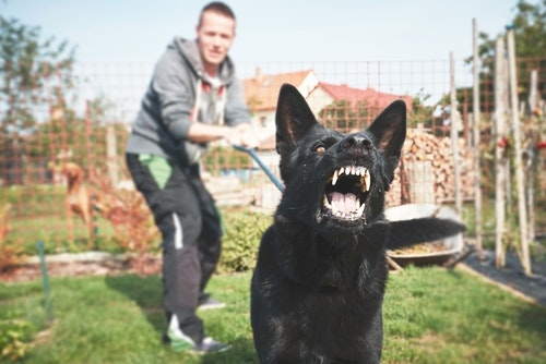 Many people can have a frightful encounter with dogs after being attacked by one or seeing an attack.