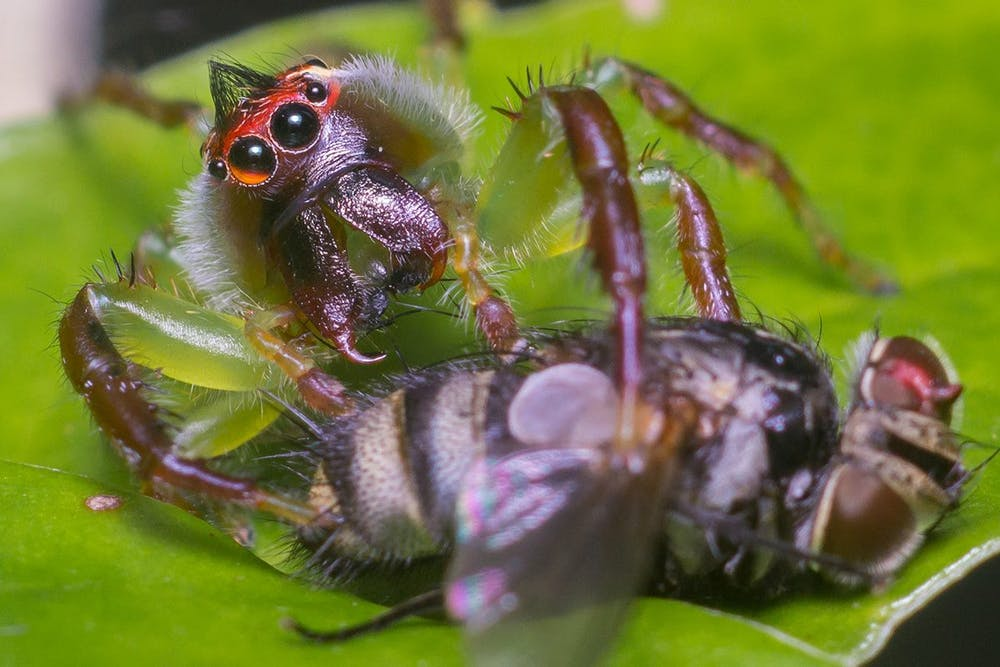 Eight reasons not to be spooked by spiders this Halloween