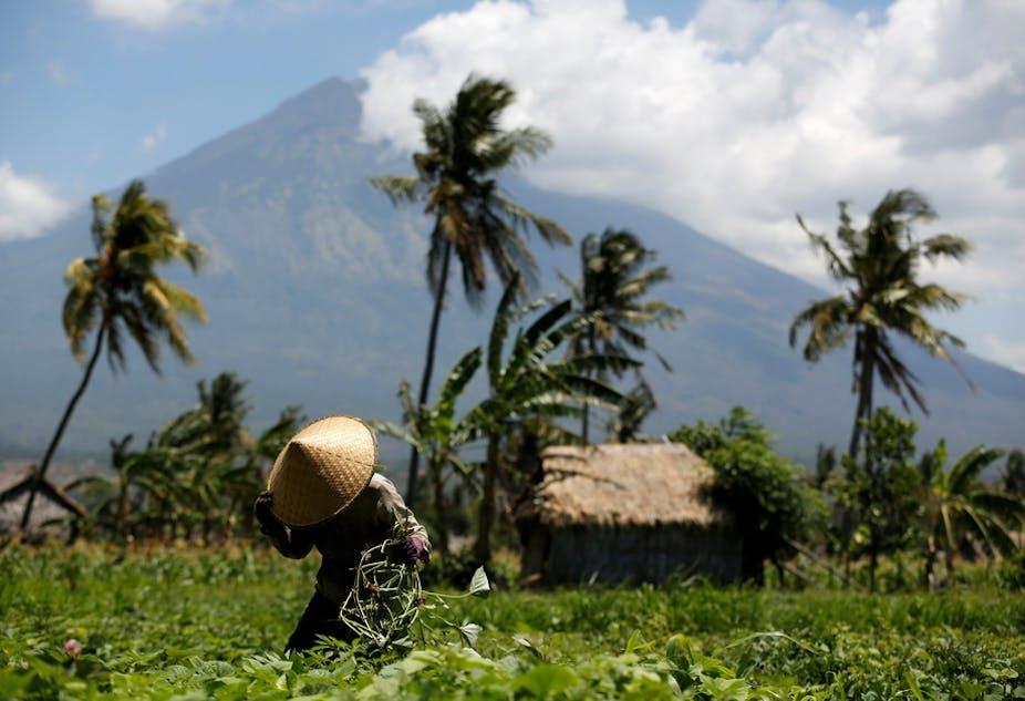 Dampak Erupsi Gunung Berapi Terhadap Vegetasi Dan Ekosistem