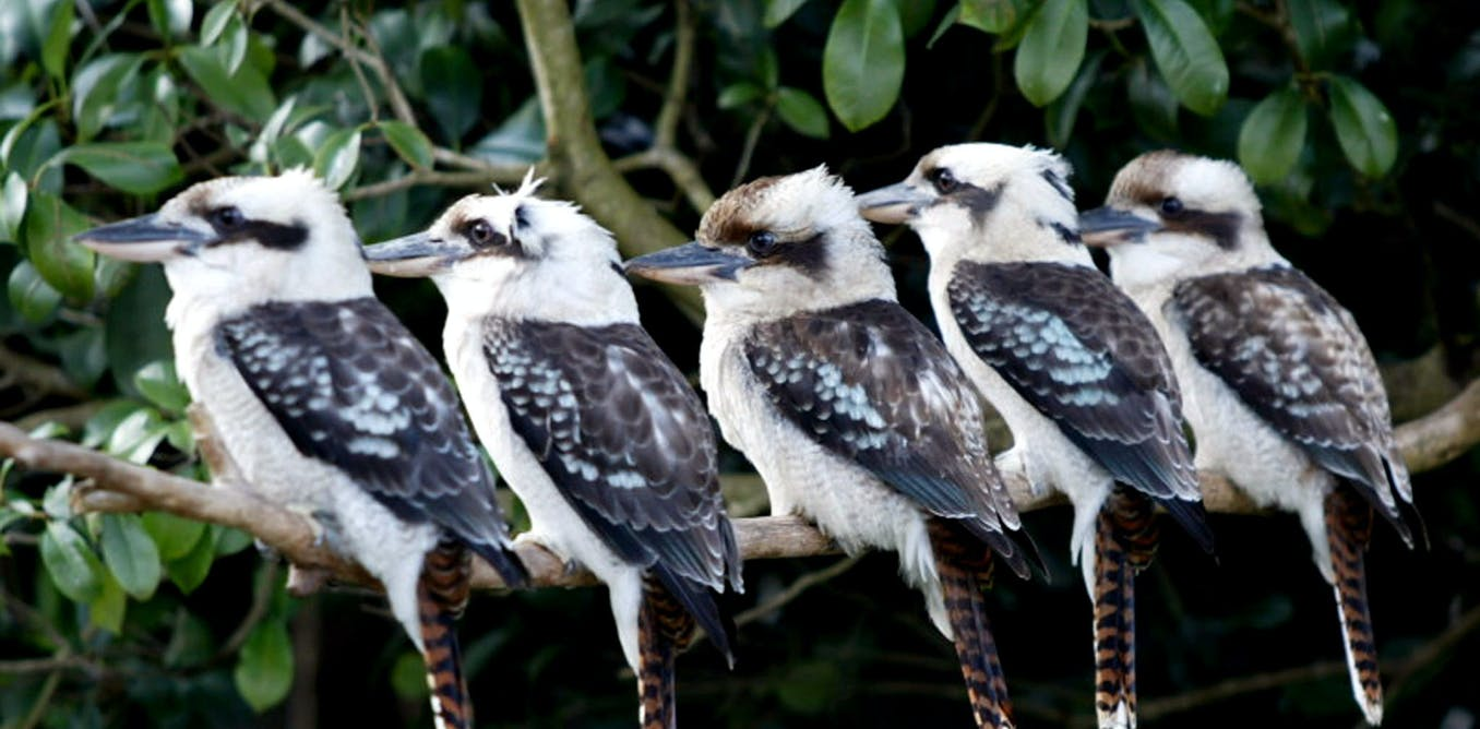 Citizen Scientists Count Nearly 2 Million Birds And Reveal