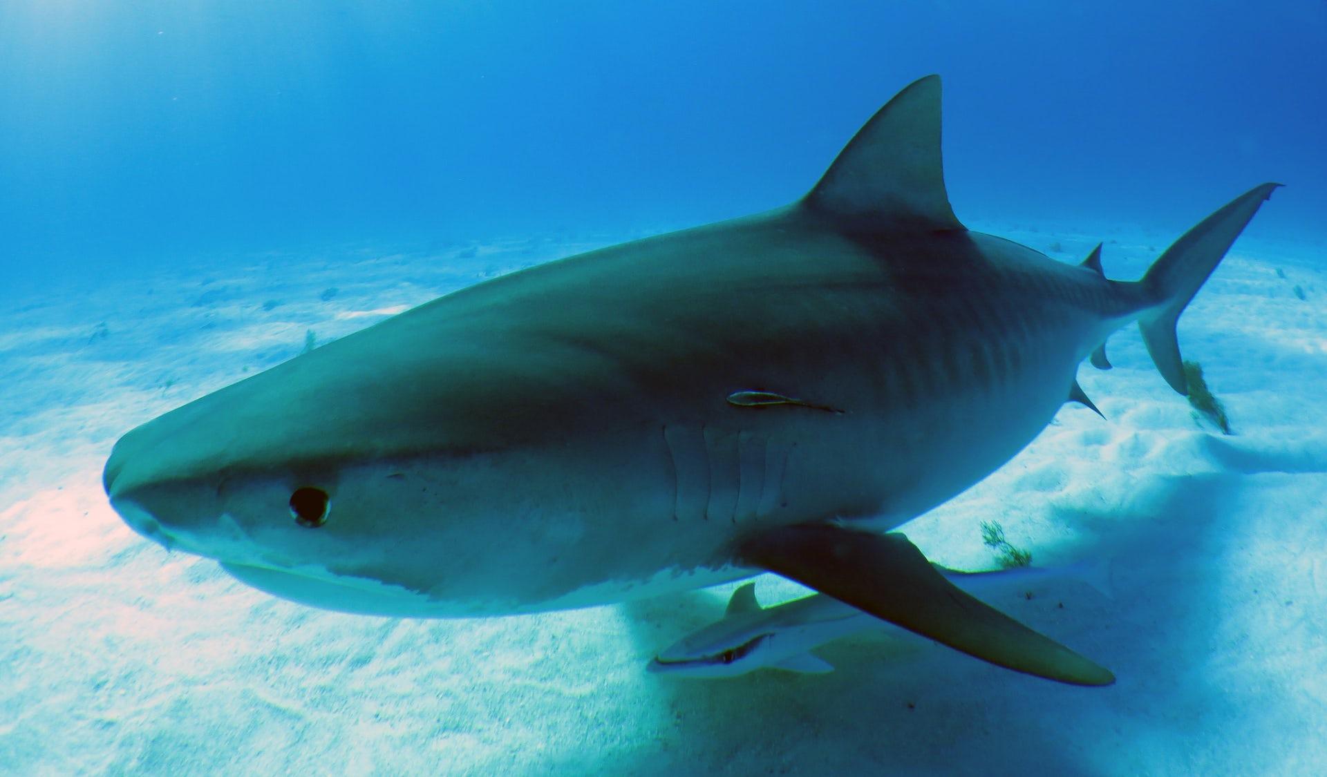 Акулы фото картинки красивые настоящие