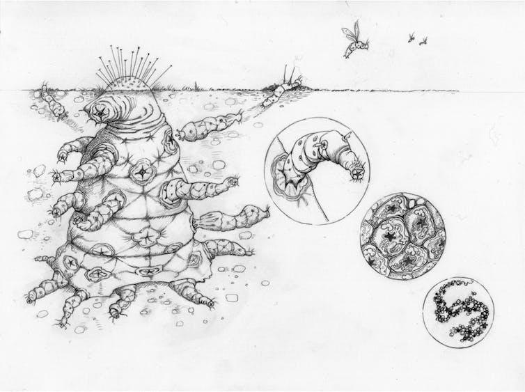 инопланетные бактерии