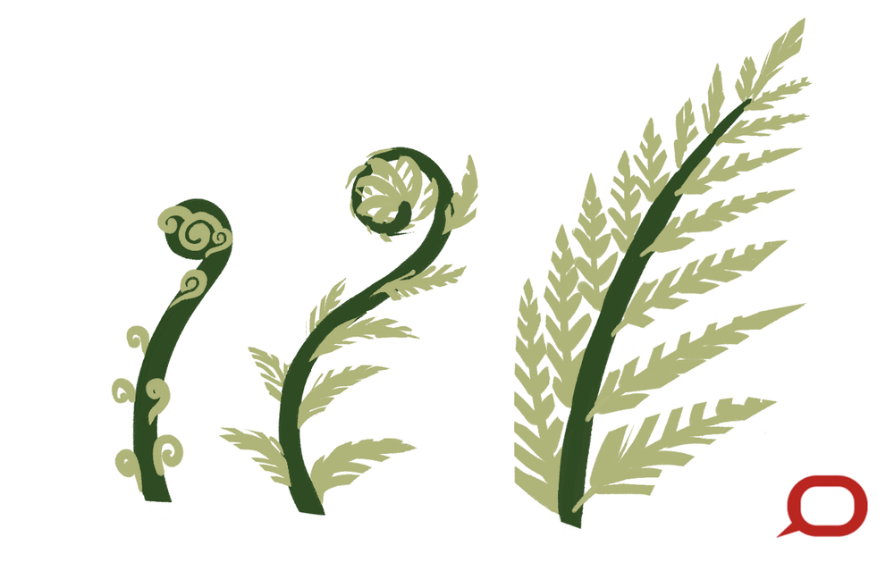 Curious Kids Why Are Fern Leaves Shaped The Way They Are And Are