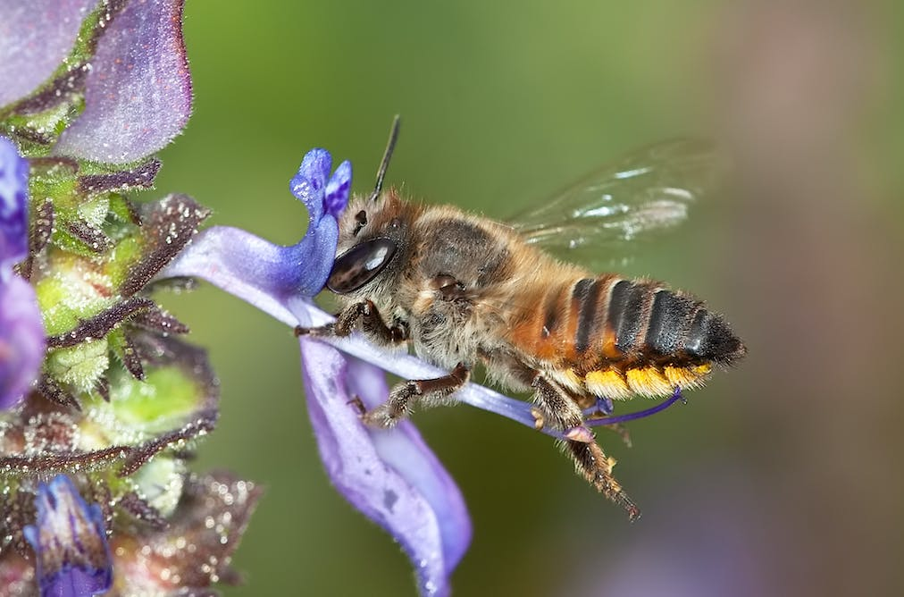 Pin by Paul Wolfe on Plants and Flowers Bee sting, Honey