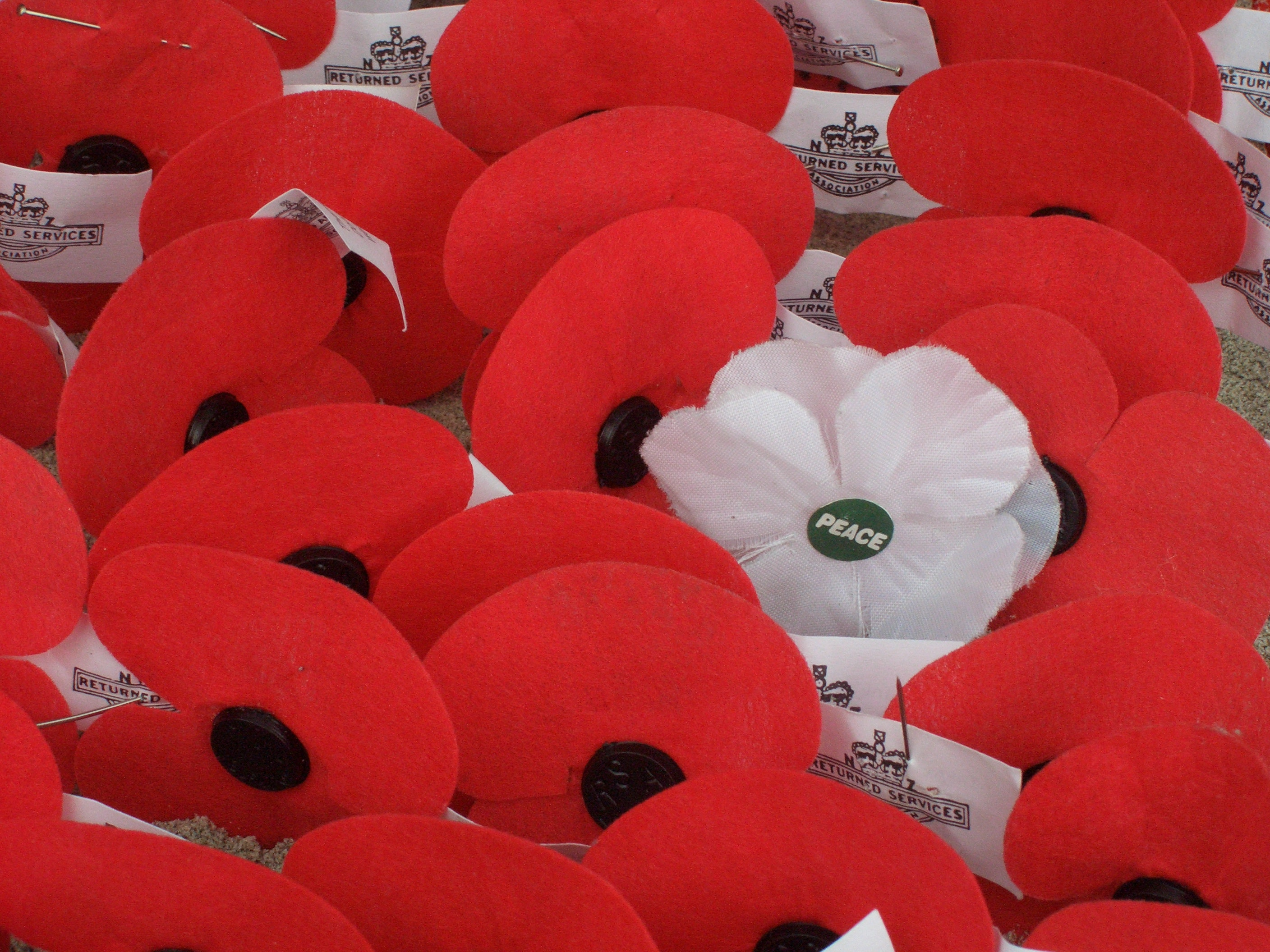 Artificial poppies left at the Waitati cenotaph in New Zealand (2009). The white poppy is used as a symbol of peace. Nankai/Wikimedia Commons, CC BY-SA