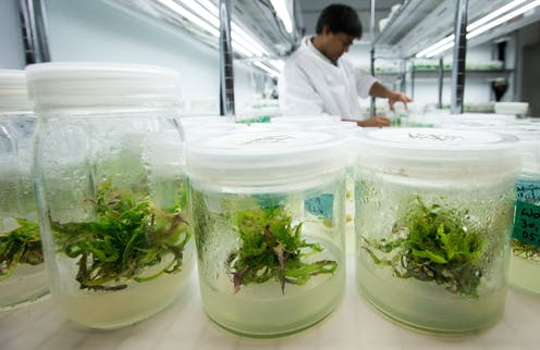 How to grow cannabis? With modern science and technology