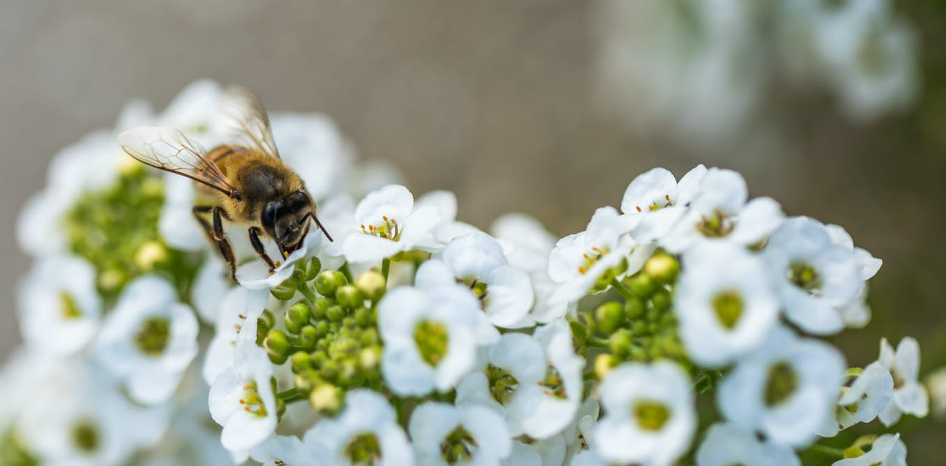 Image result for The hidden health benefits of bee stings