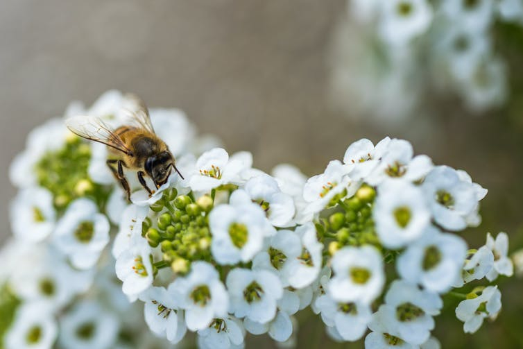 Bee Aware, But Not Alarmed: Here's What You Need To Know About Honey Bee Stings