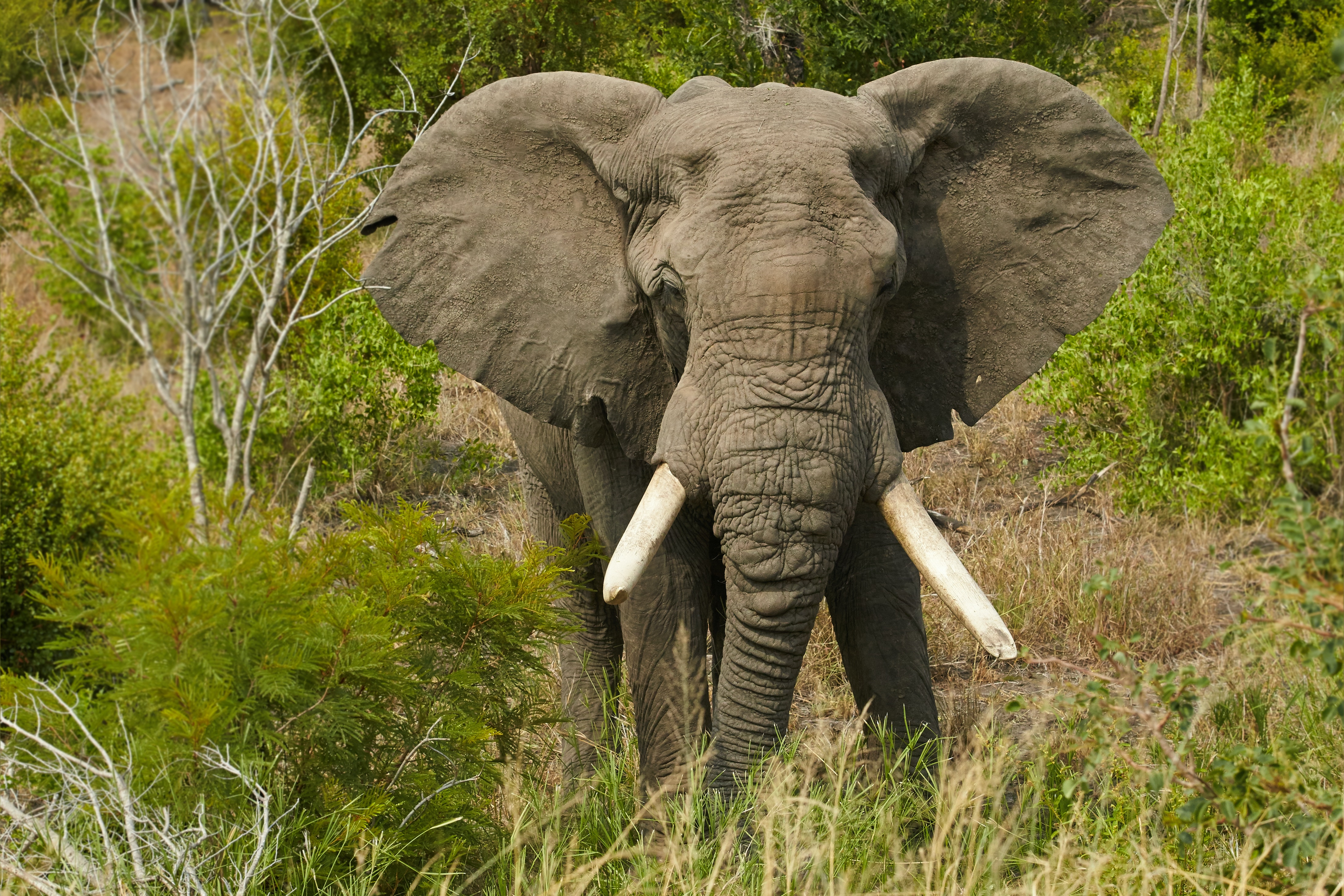 Picture of an elephant