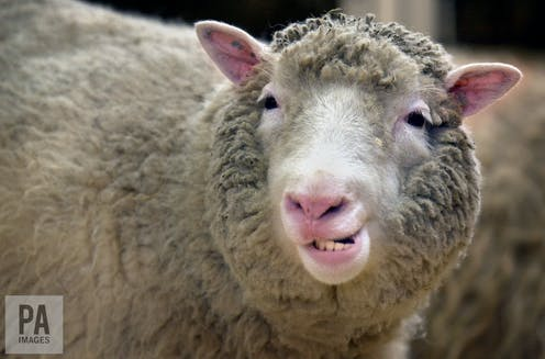 dolly the sheep didn t develop premature arthritis after all and