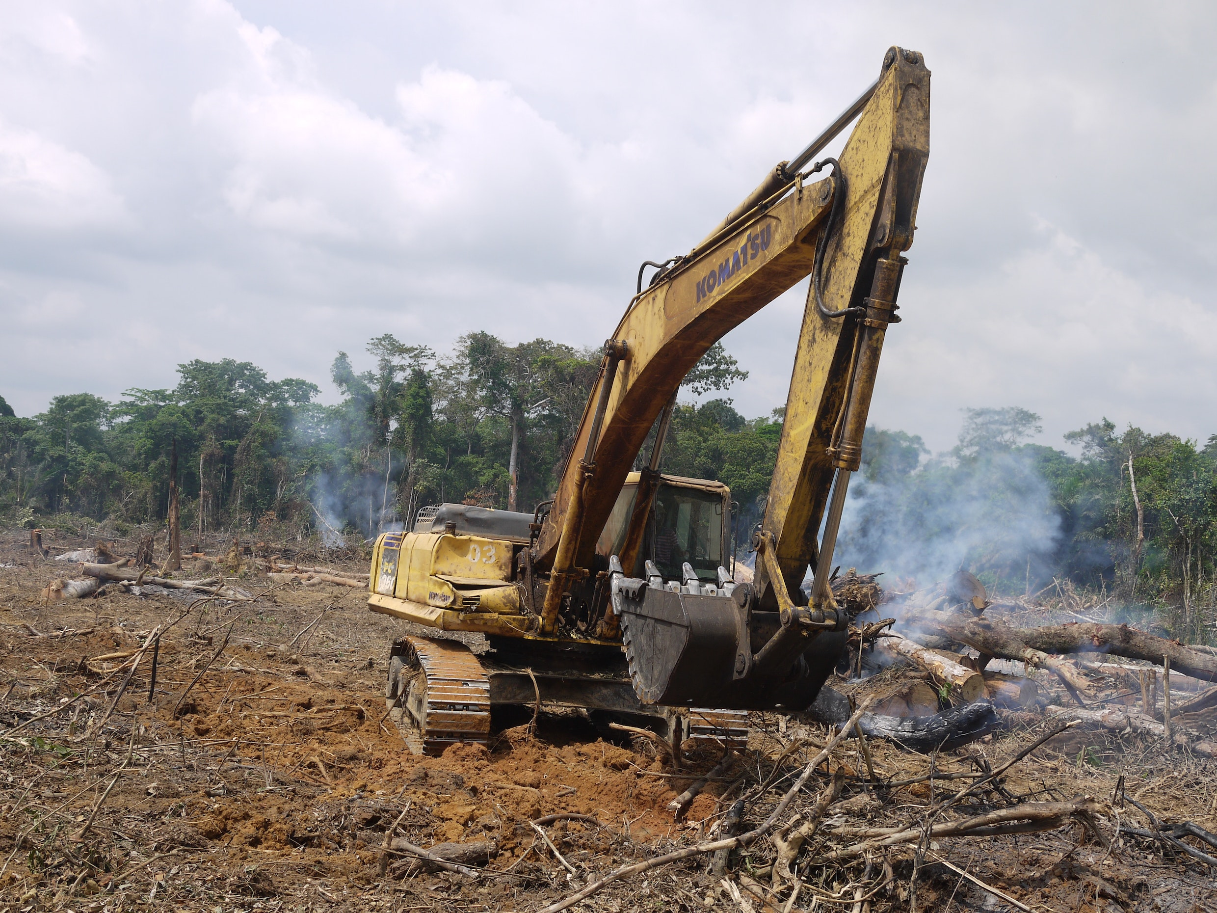 A Chinese road-building corporation felling rainforest in the Congo Basin