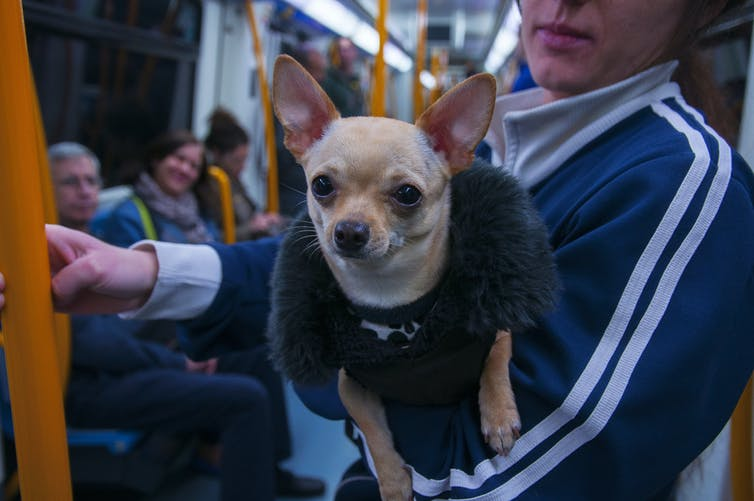 Riding in cars with dogs: Public transport policy needs to change
