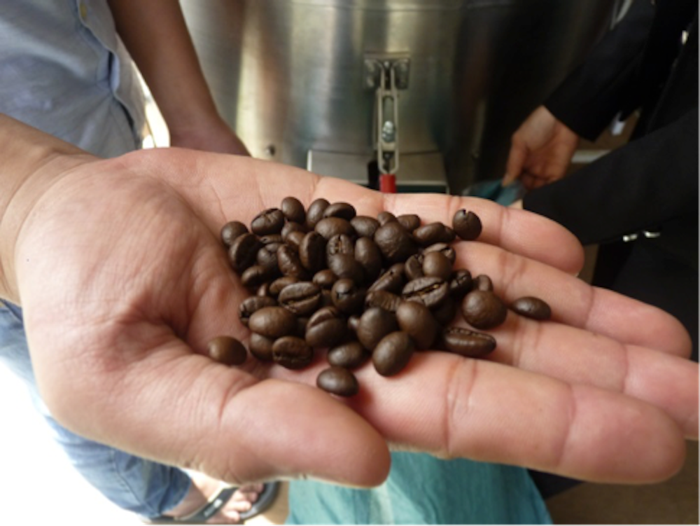 Going to ground: how used coffee beans can help your garden