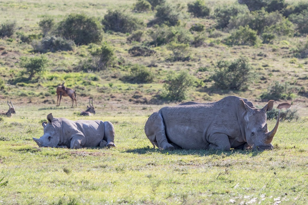 """discss whether rhino poaching is ethically Annette hübschle, who recently authored a report on rhino poaching for the global initiative against transnational organized crime, echoed those sentiments she said the """"current militarized approach"""" is pushing people away from any chance they might have to participate in conservation."""