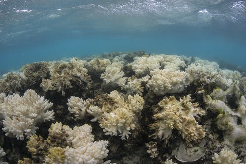 It S Official 2016 S Great Barrier Reef Bleaching Was