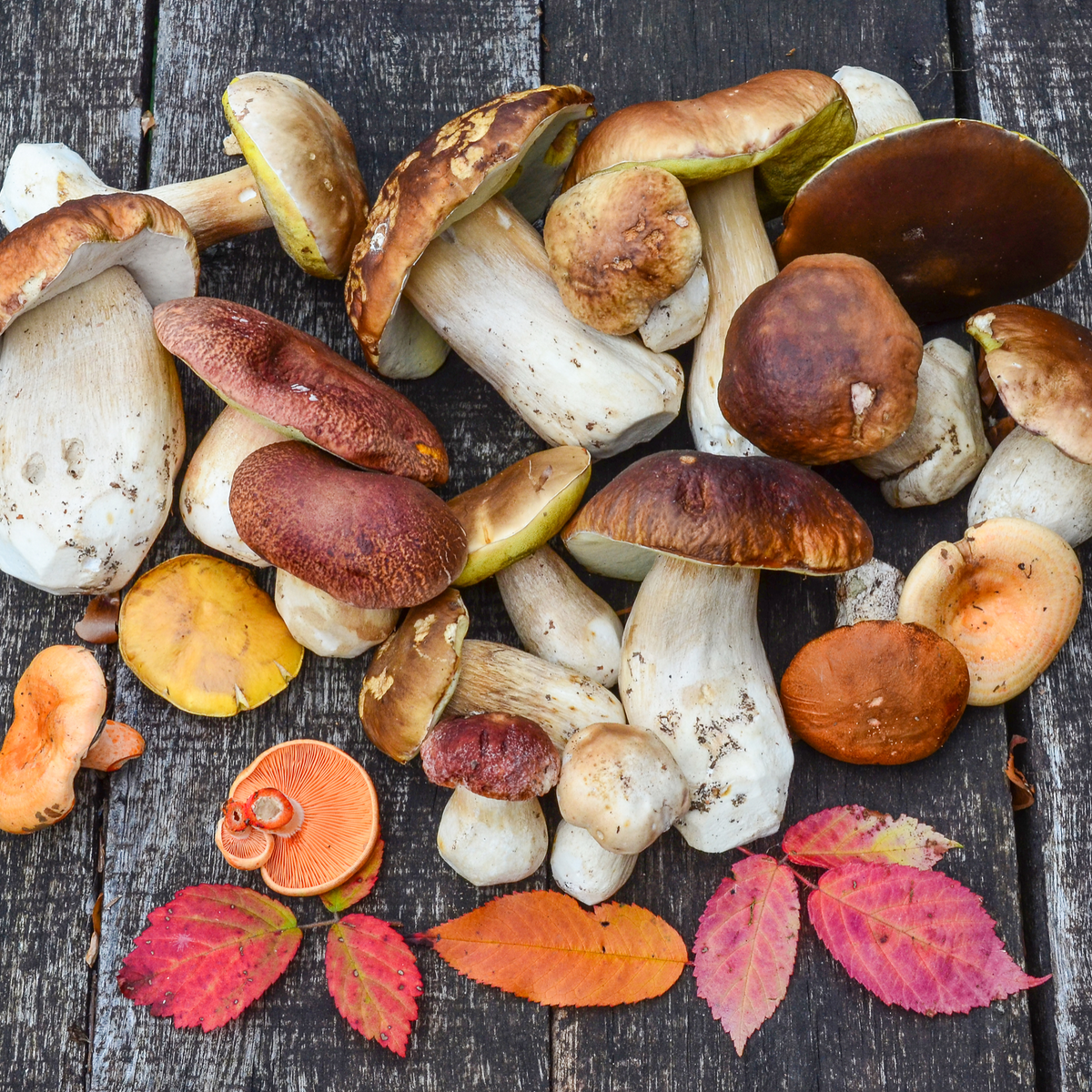 Stinkhorns, truffles, smuts: The amazing diversity – and possible