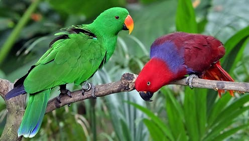 You might be Christmassed out, but these Australian birds