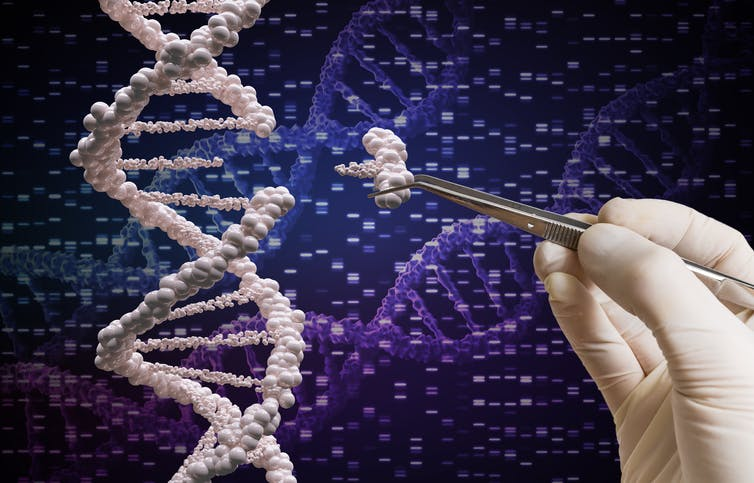 Only one Canadian researcher has ever received the Nobel Prize for medicine, for the discovery of insulin in 1923. And yet Canadians have been essential to developments in stem cell research, gene sequencing and treatments for cancer and brain trauma. (Shutterstock)