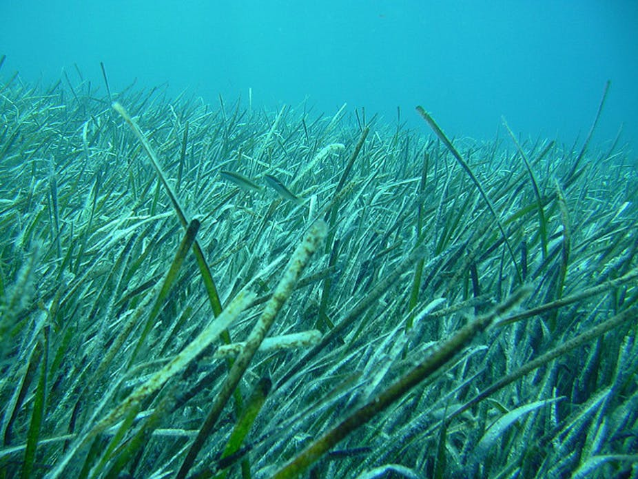 failure to protect seagrass may cost australia 45b