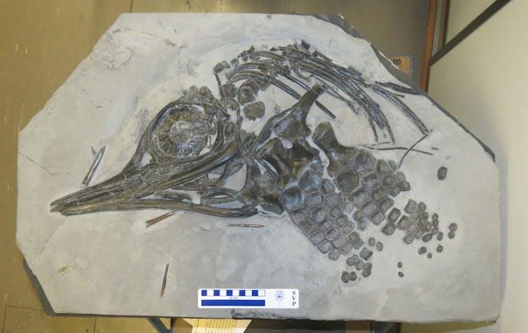 David Attenborough S Sea Dragon And The Science Behind A