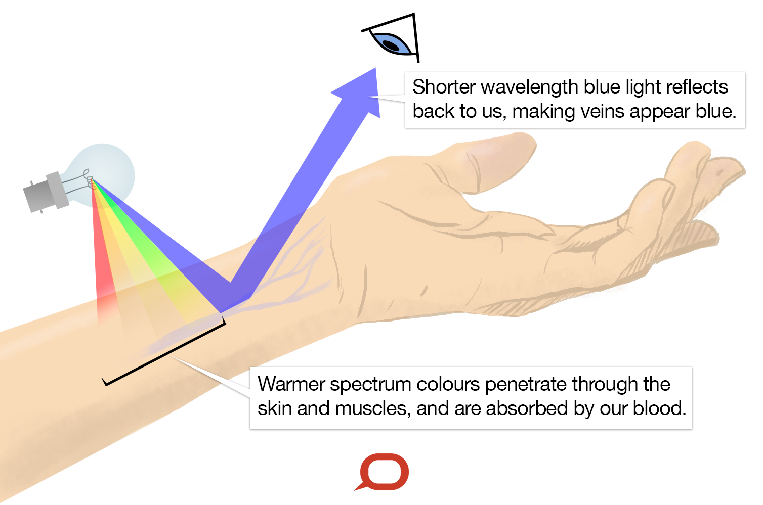 why veins appear blue