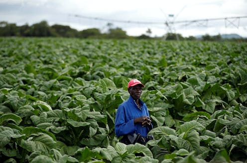 Ten priorities for getting agriculture moving in Zimbabwe