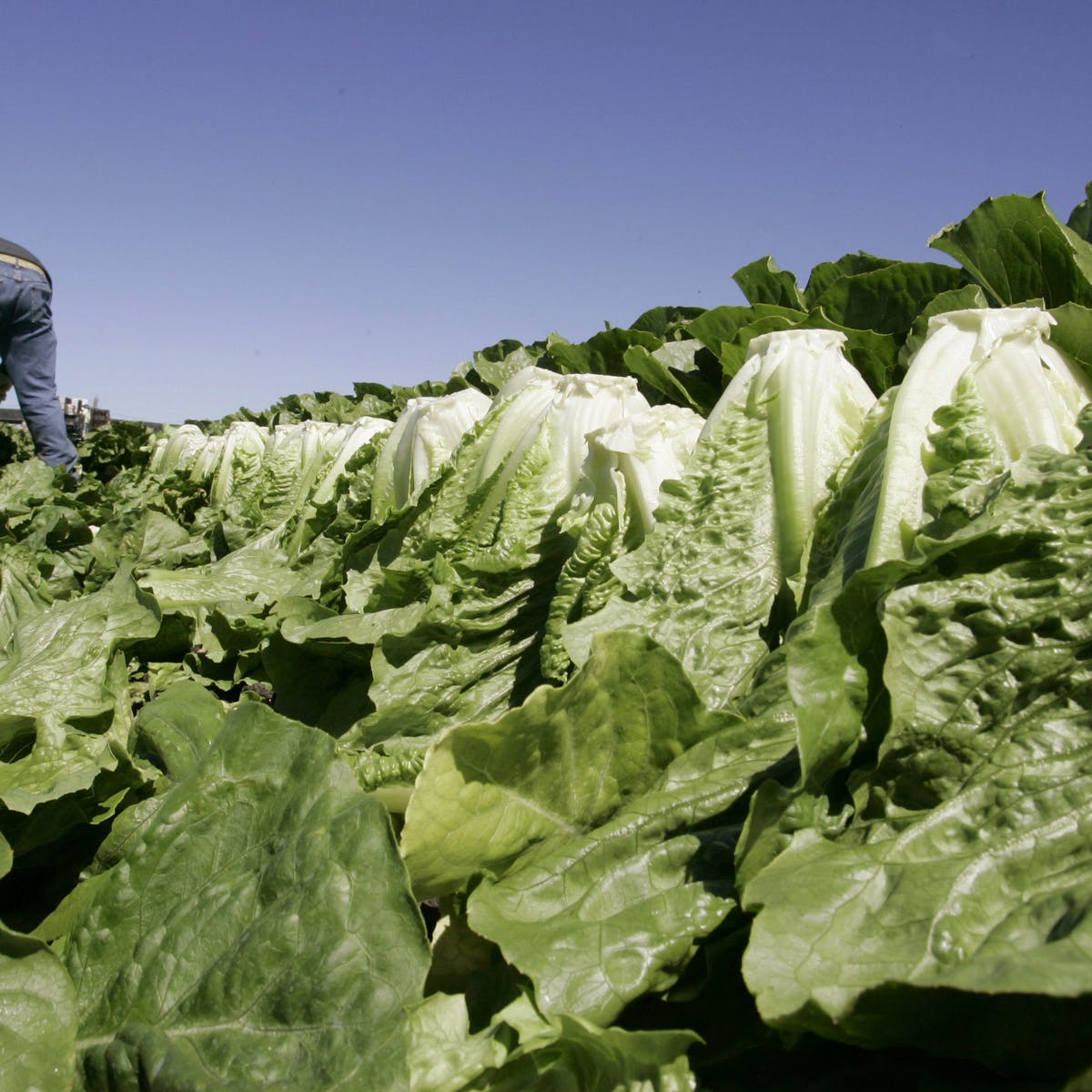 Everything you need to know about fresh produce and E  coli