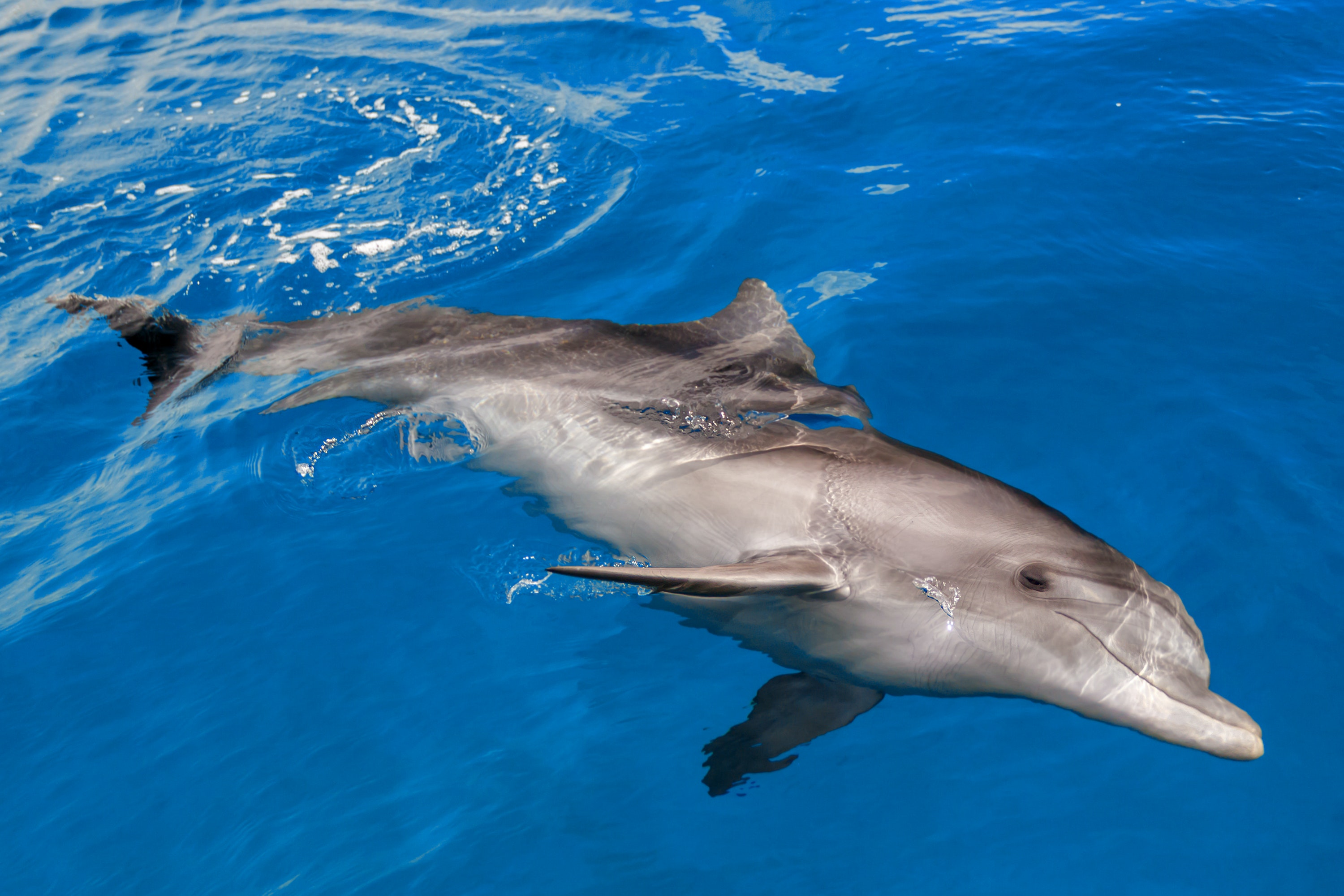A rare glimpse into the world of the Red Sea's dolphins ...