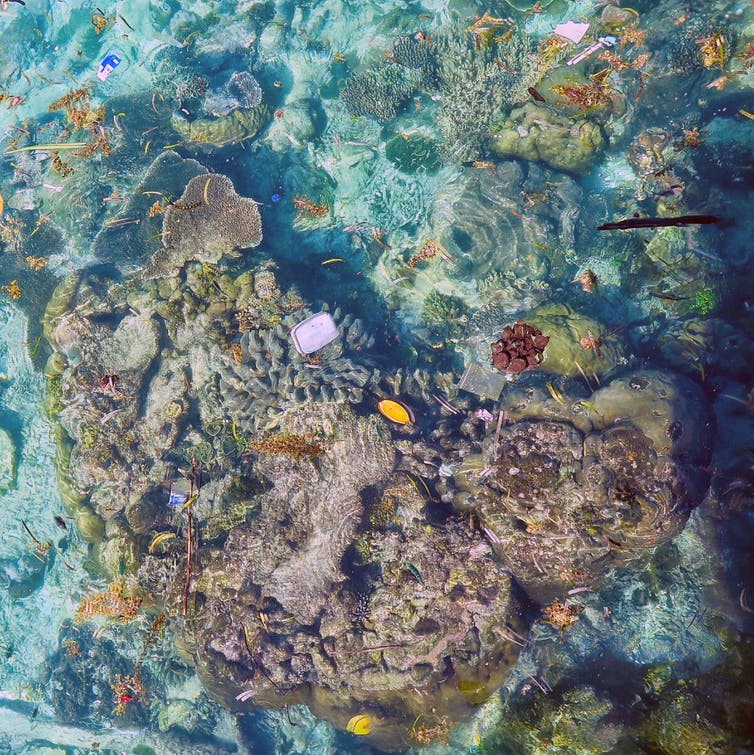 11 billion pieces of plastic bring disease threat to coral reefs
