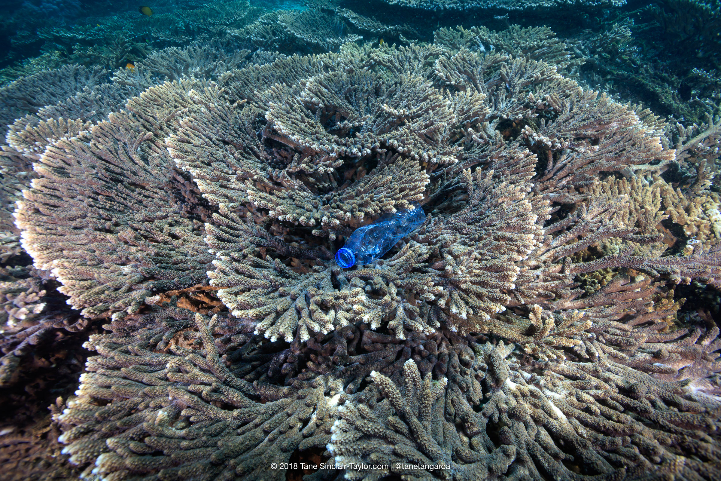Coral reefs get sick from plastic waste