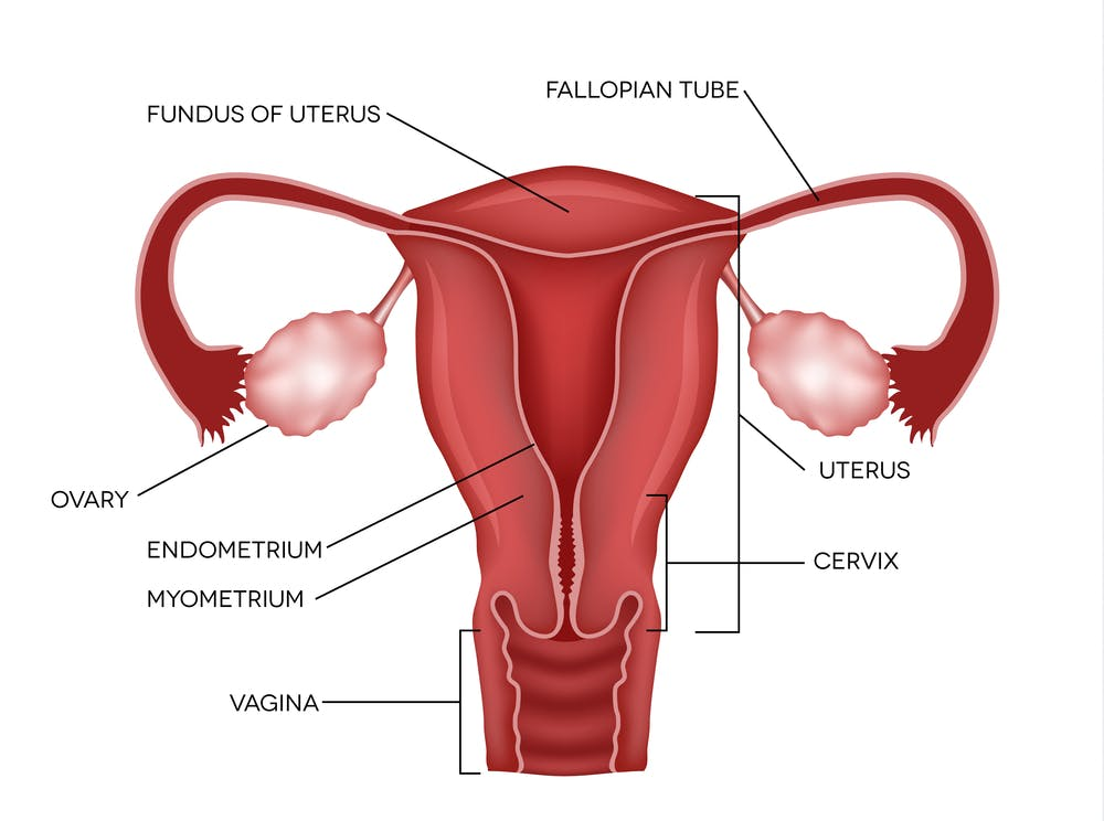 Unusual Conditions Mrkh Syndrome When A Womans Uterus Never
