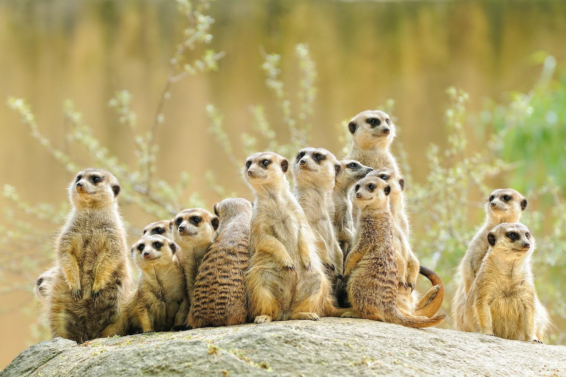 meerkats  how we used radar to reveal the underground maze