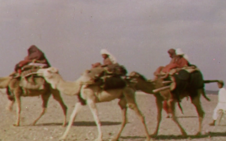 Camels crossing. A still from Quetta Damghan. Courtesy: British Film Institute/Royal Geographical Society