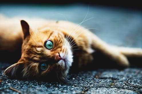 Cat plague is back after nearly 40 years in hiding – here's