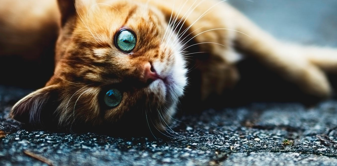 Cat plague is back after nearly 40 years in hiding – here's what you need to know