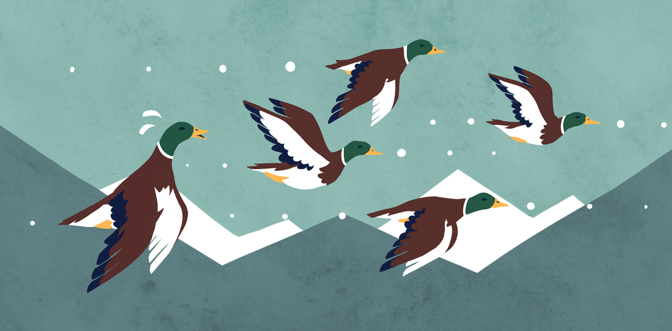 Curious Kids: Why aren't birds pulled down by gravity while they're