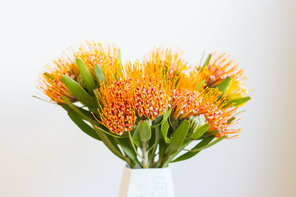 Sustainable shopping your guilt free guide to flowers this for a sustainable take on the floral valentine try a banksia bouquet emily orpinflickr cc by nc mightylinksfo